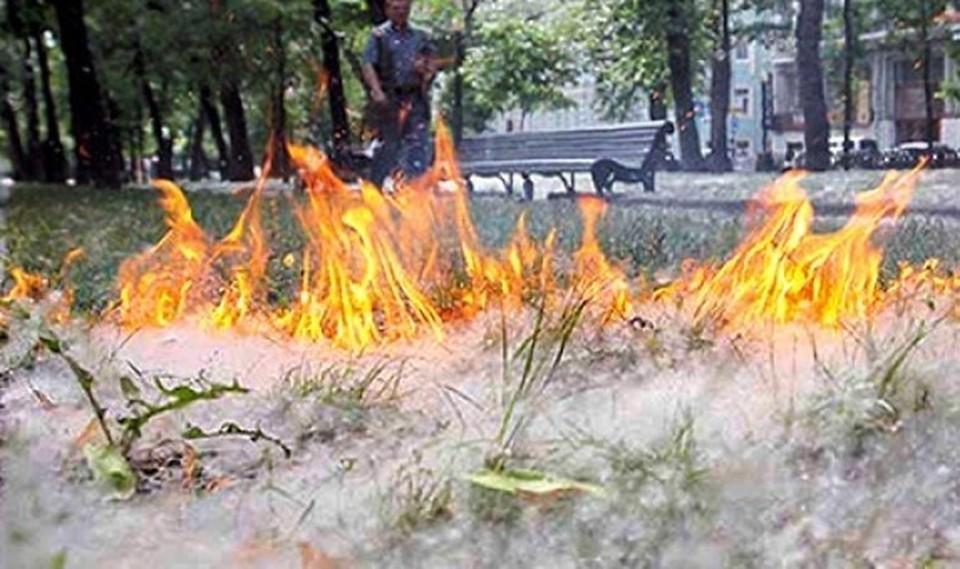 """Белый """"порох"""" - причина многочисленных пожаров. Фото: ГУ МЧС России"""