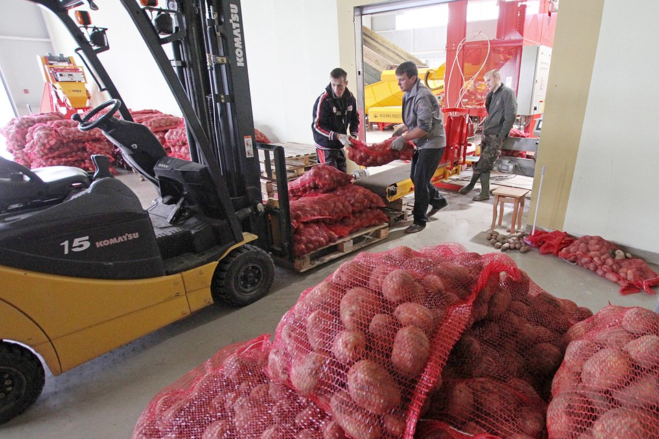 Коррекция цен на овощи открытого грунта и картофель ожидается по мере сбора нового урожая
