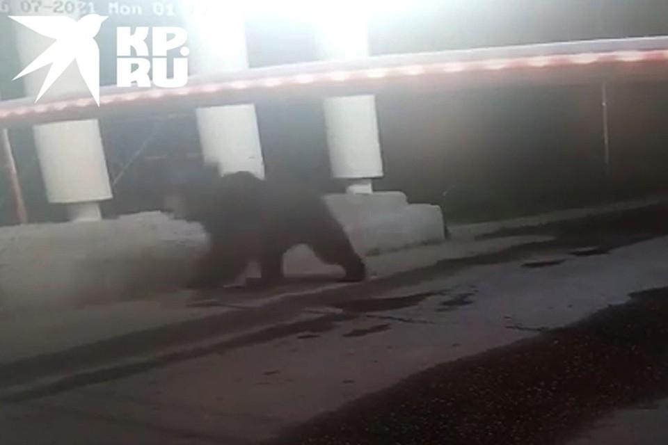 Мишка попал на кадры камеры наблюдения.