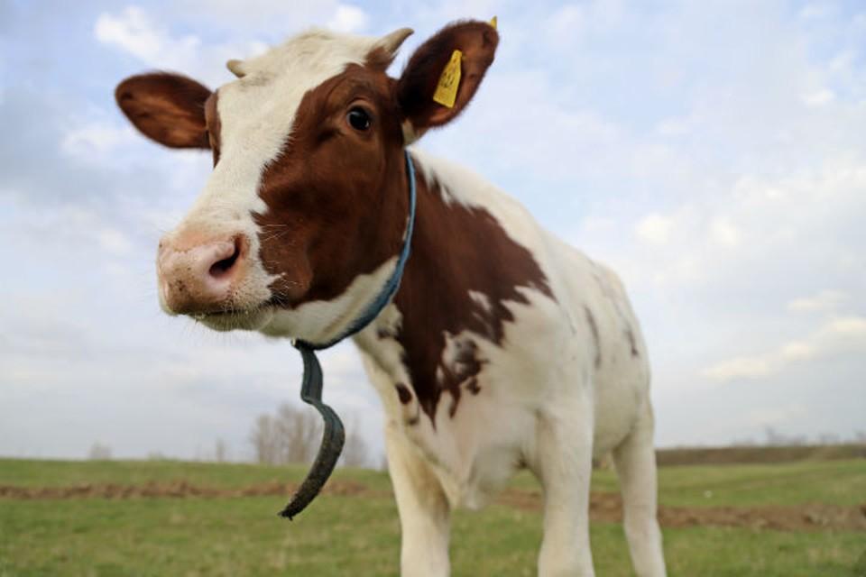 В Ярославской области закрыли ферму из-за жалоб местных жителей на запах