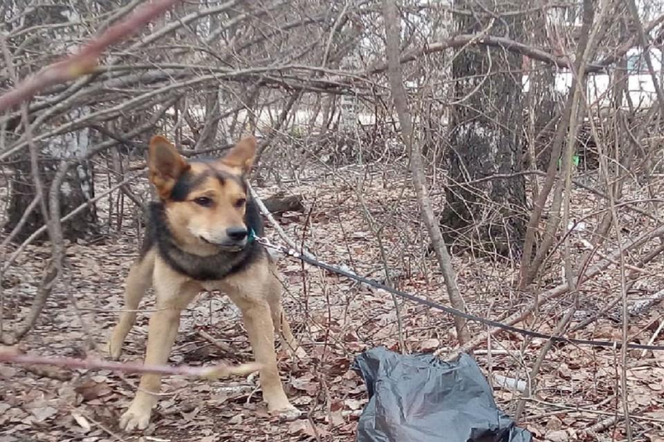 Несмотря на жестокое предательство собака дружелюбна и спокойна. Фото: предоставлено Ульяной Вараксиной.