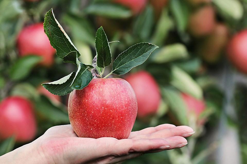 И сколько свежих фруктов ижевчане должны съедать в сутки Фото: pixabay.com