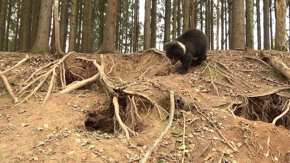 Фото: пресс-служба министерства природных ресурсов и охраны окружающей среды Коми