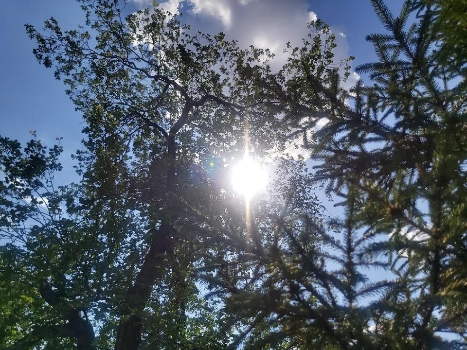 Выходные в Омске будут солнечными и жаркими.