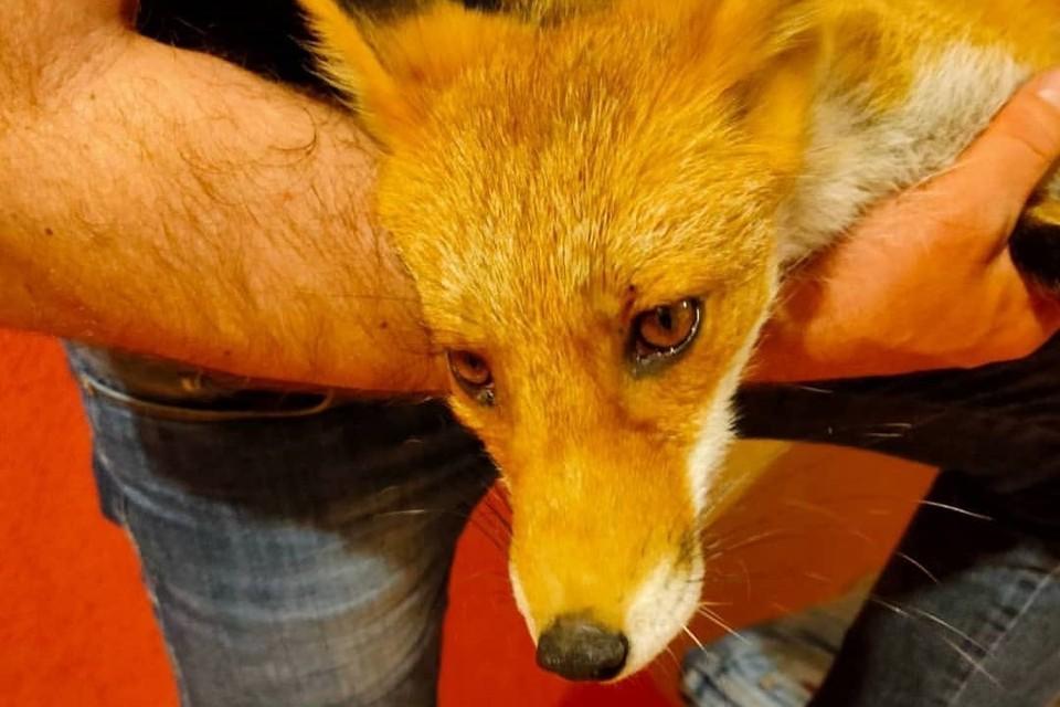 Местные жители предложили выйти на поиски детенышей с собакой. Фото: Instagram-аккаунт @fond_greensakhalin