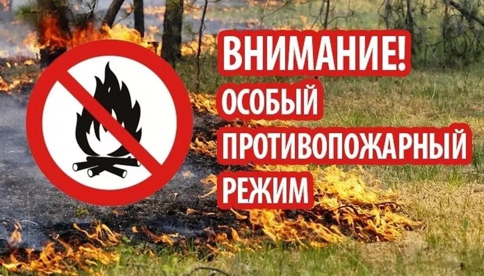 На период действия особого противопожарного режима запрещено разводить костры в лесных массивах. Фото: mchs.gov.ru