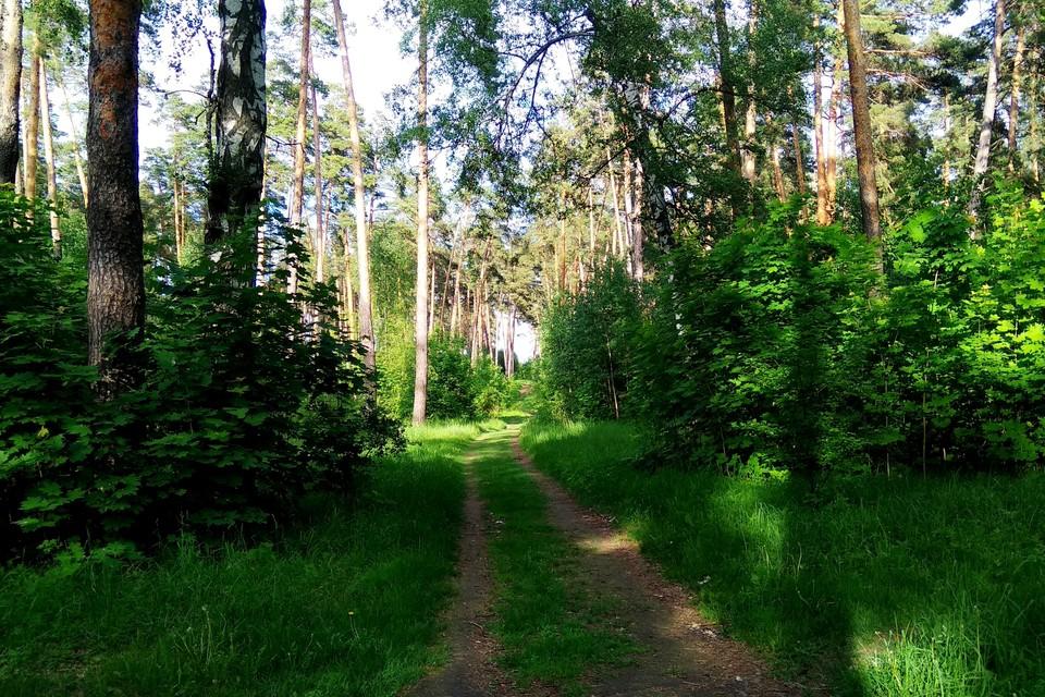 В Липецкой области продлили ограничение на посещение лесов