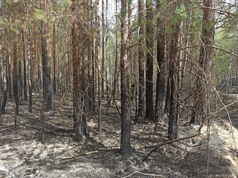 Посещать леса запрещено