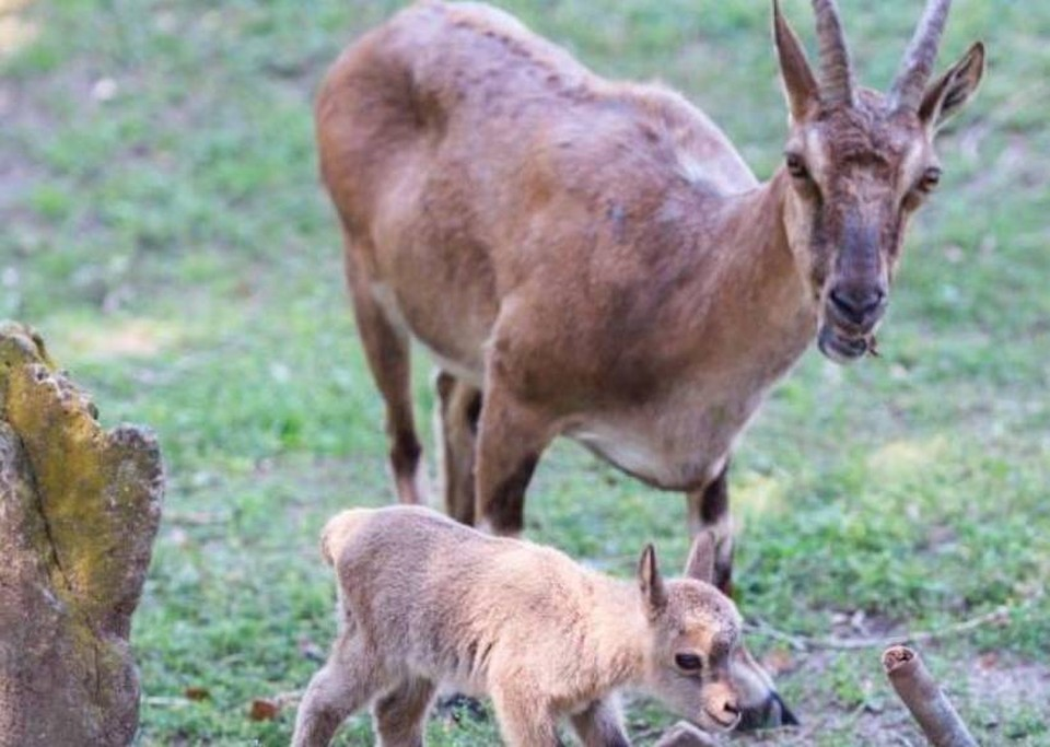 Малыши не отходят от родителей. Фото: пресс--служба зоопарка в Ростове