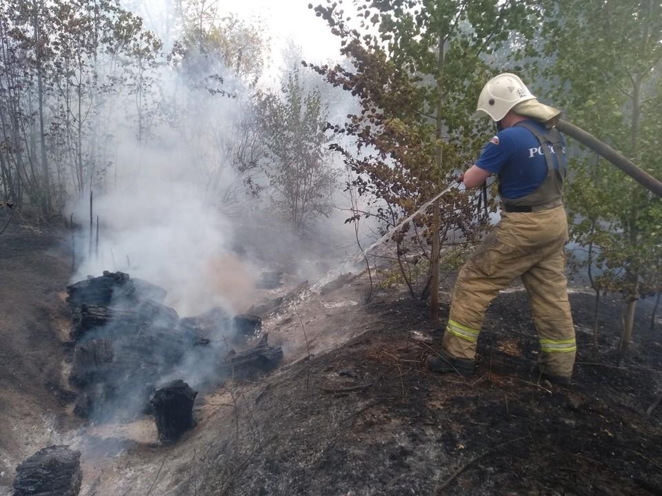 Крупный лесной пожар тушат в Тольятти. Фото - ГУ МЧС России по Самарской области