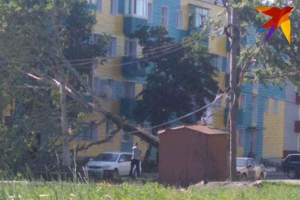 Дерево рухнуло в нескольких метрах от жилого дома. Фото: Владимир Калтаков