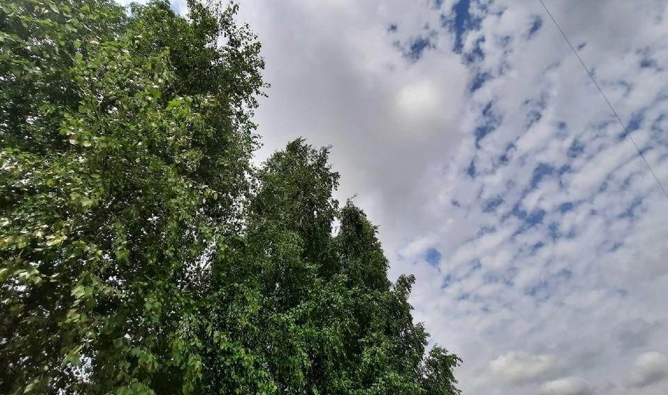 Погода в Югре на 13 июля 2021 года: местами кратковременный дождь