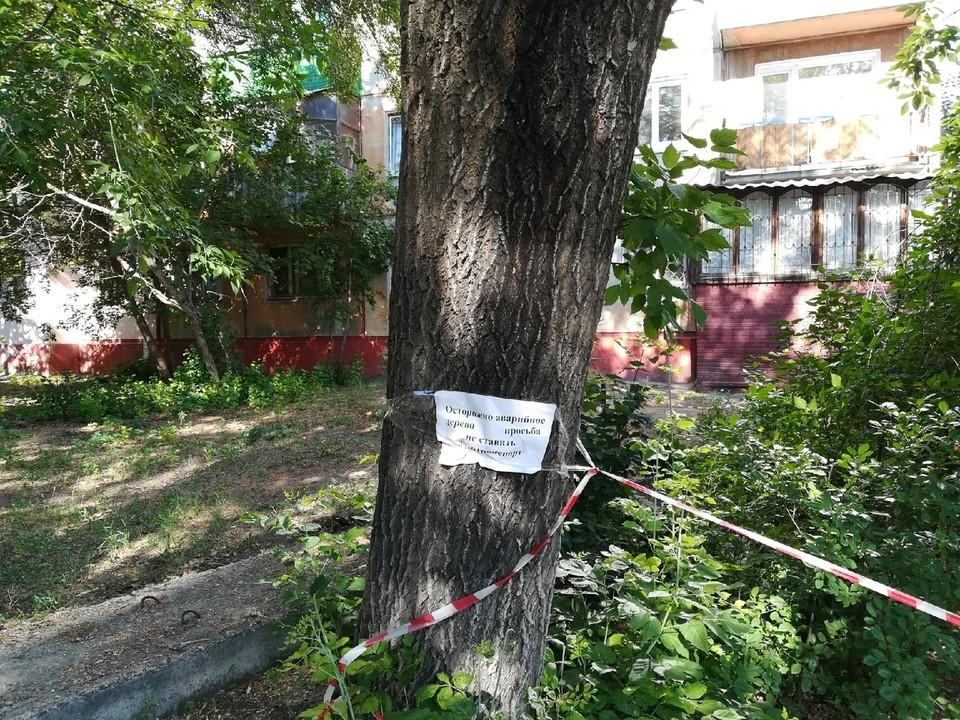 На деревьях даже повесили объявления: «Осторожно, аварийное дерево. Просьба не ставить машины»