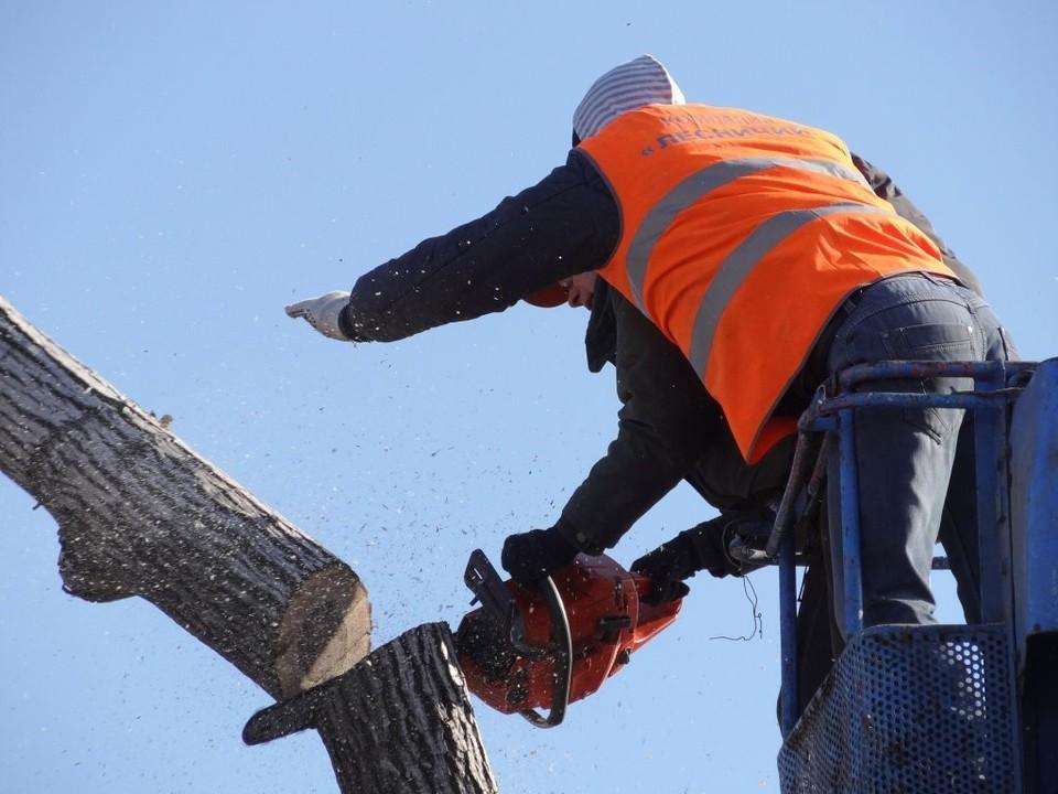 Вырубленные деревья компенсируют в осенних посадках