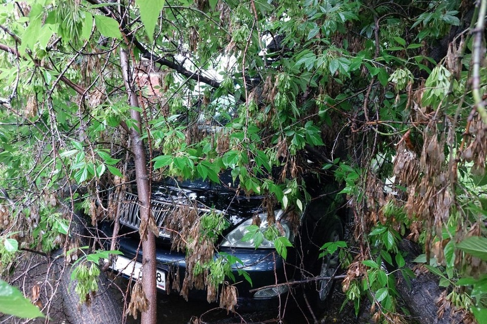 Дерево упало на автомобиль в м-не Ново-Ленино в Иркутске