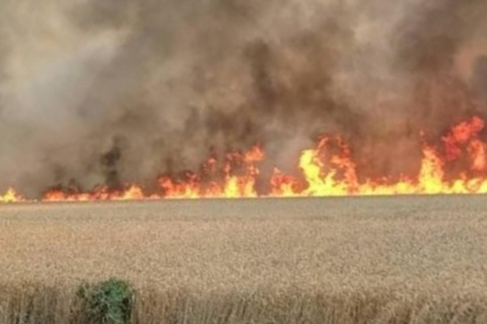 В Новоалександровском округе огонь уничтожает поля. Фото: социальные сети