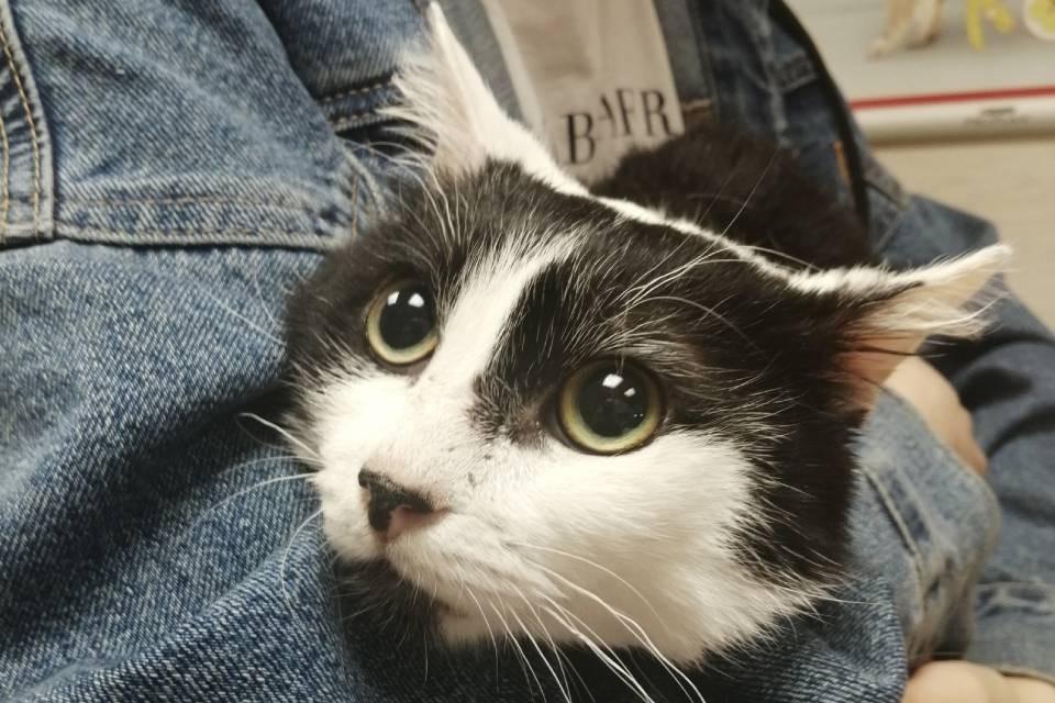 Кошкам из квартиры в Коле нужны передержки. Фото: vk.com/murmandogs