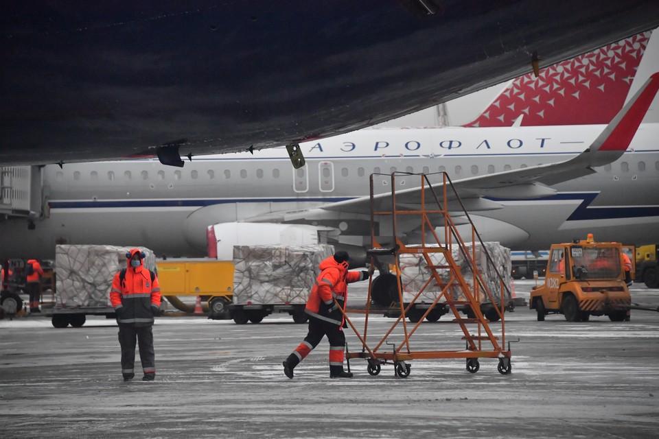 В омском аэропорту чаек назвали главными врагами самолетов
