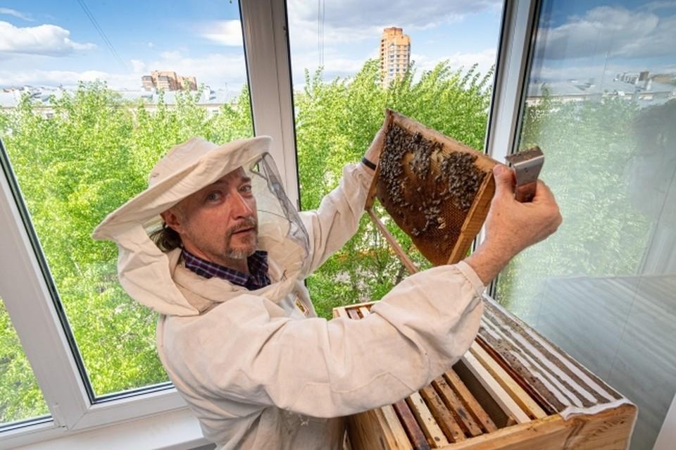 Как поддержат пчеловодов в Самаре