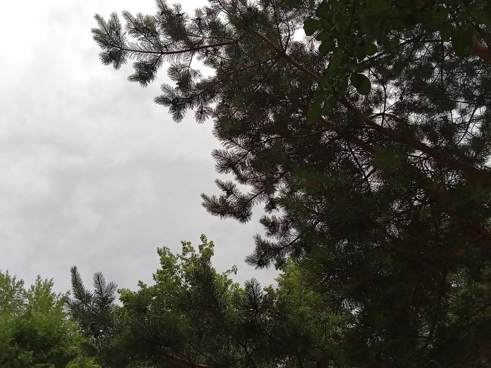 Погода на Ямале на 19 июля