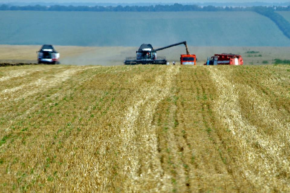 В Башкирии в этом году озимые зерновые культуры сохранились на площади всего 363 тысячи гектаров