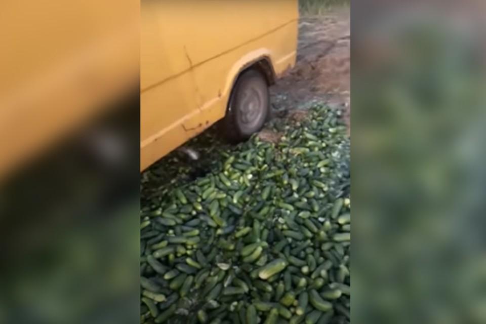 Видеофакт: из-за низкой закупочной цены фермер из Ольшан давит собственноручно выращенные огурцы.