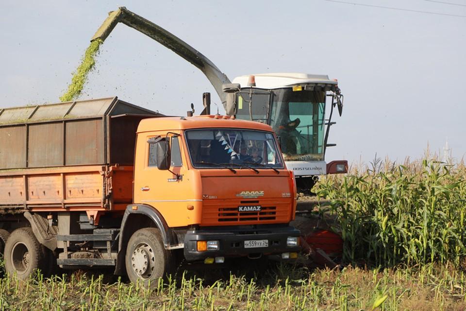 Ущерб от нашествия саранчи фермеры не подсчитали до сих пор