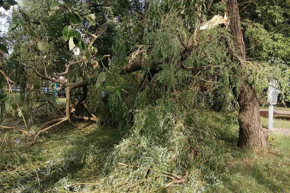 Последствия грозы в Бобруйске 19 июля. Фото: МЧС
