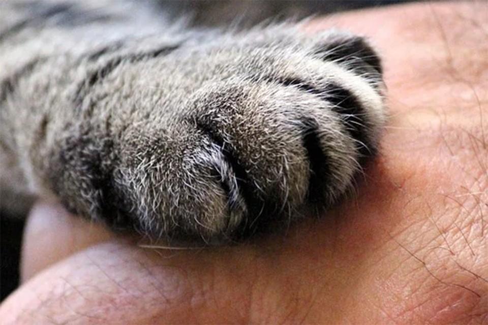 Витебские спасатели достали котенка достали из «неправильного» места. Фото: pixabay