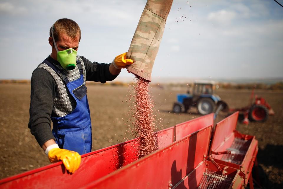 Уже погибло чуть меньше половины всего урожая озимых.