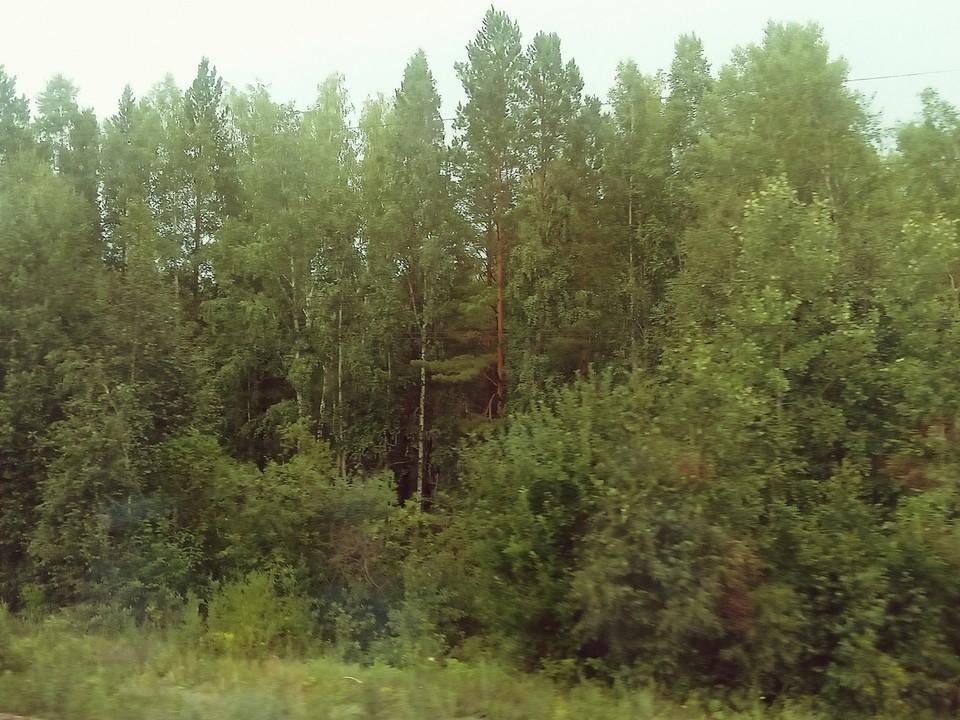 Погода на Ямале на 22 июля.