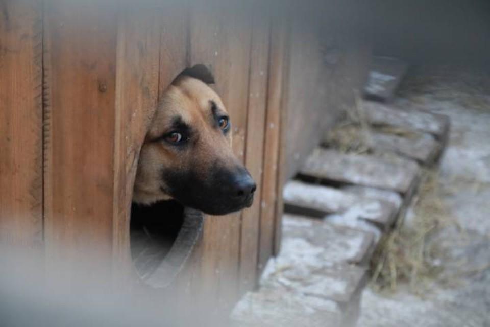 Действительно ли собака загрызла куриц осужденного не известно
