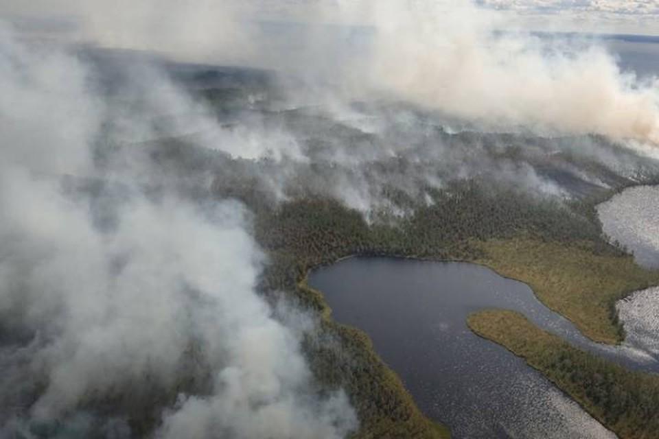 Лесной пожар в Карелии охватил 9 тысяч гектаров / Фото: МЧС Карелии
