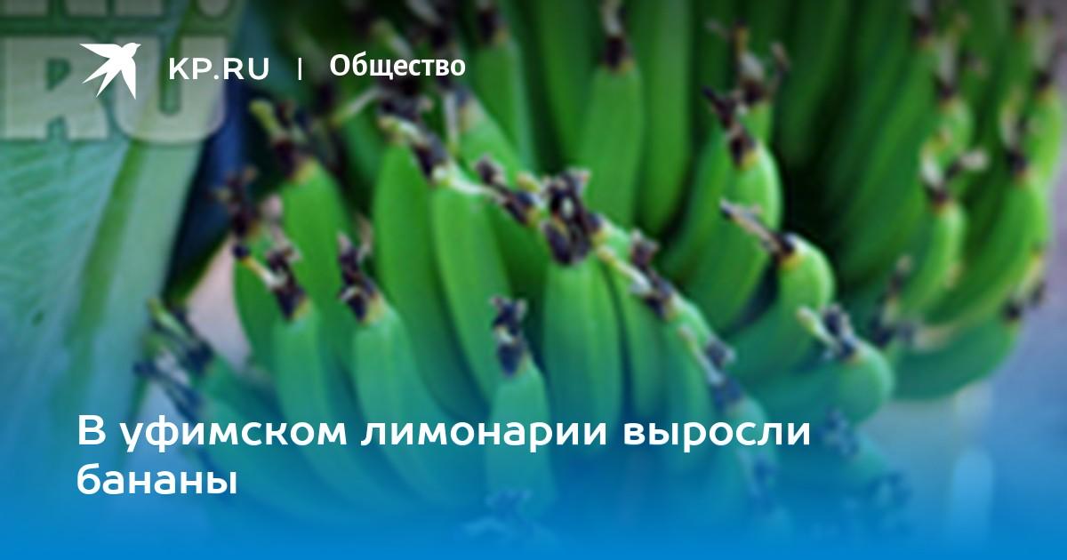 Номер телефона микрозайма банан