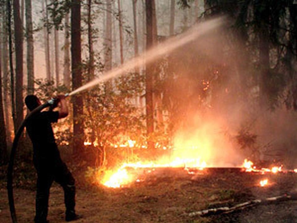 Латвийские пожарные потушили свой первый лесной пожар в Подмосковье