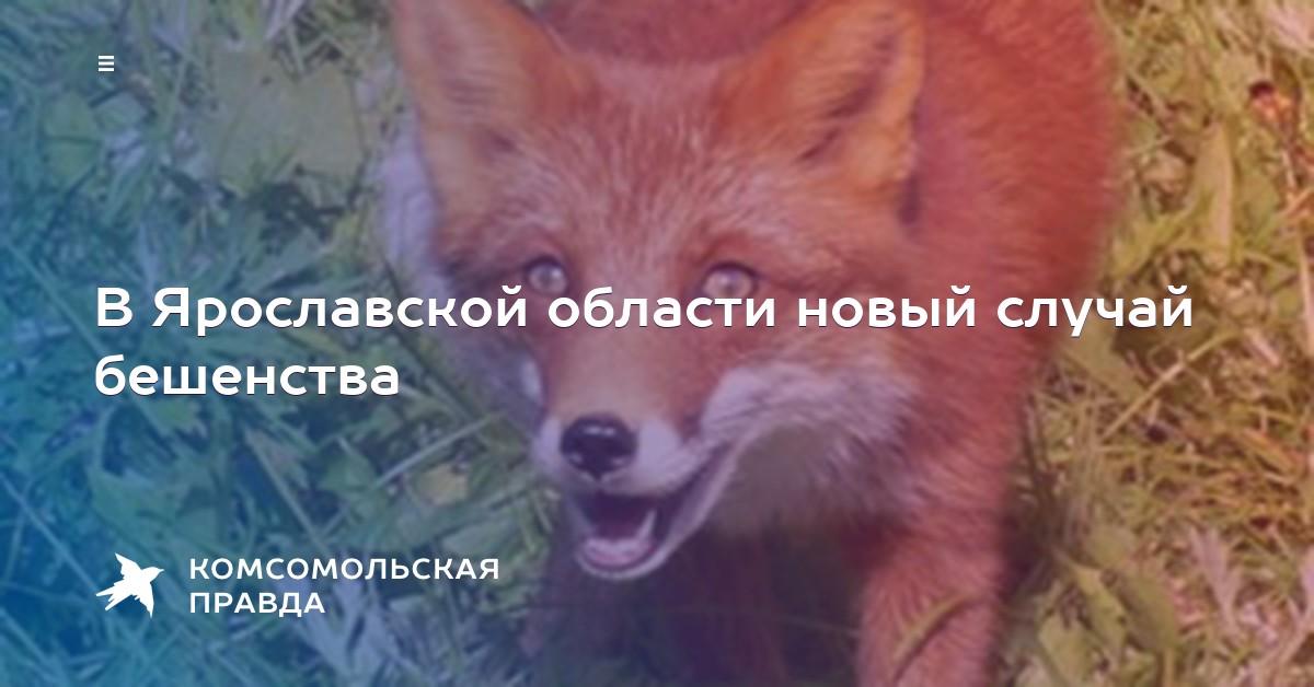 бешенство в ярославской области году большой