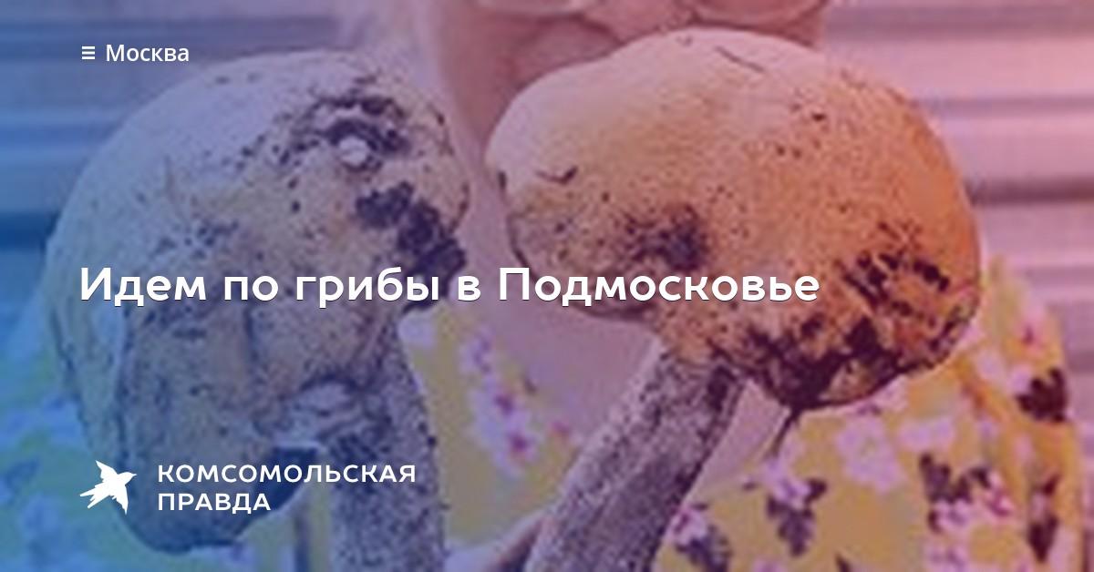 «Когда Сезон Белых Грибов В Подмосковье» / 2010