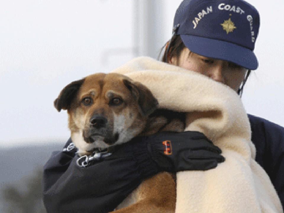 В Японии спасли собаку, которая пропала во время цунами 21 день назад