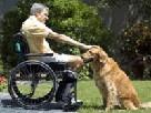 Пес спас хозяина, который сломал позвоночник