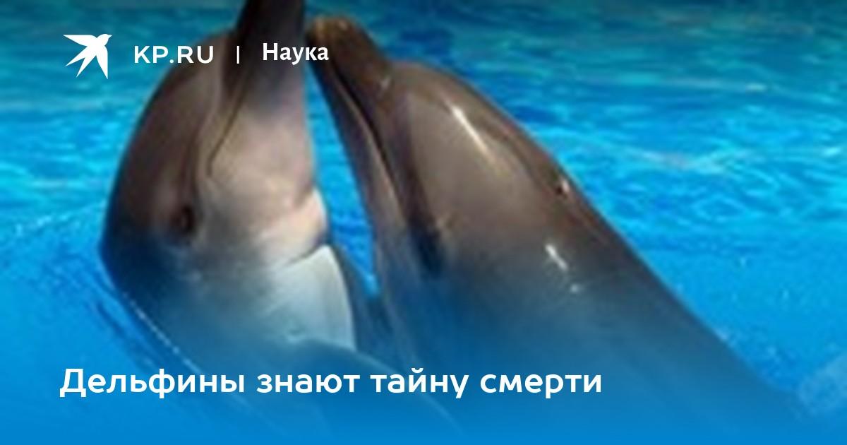 Дельфиний пенис видео