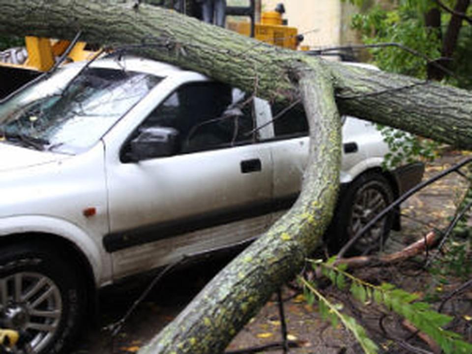 Дерево повалило ветром, и оно упало на припаркованную машину