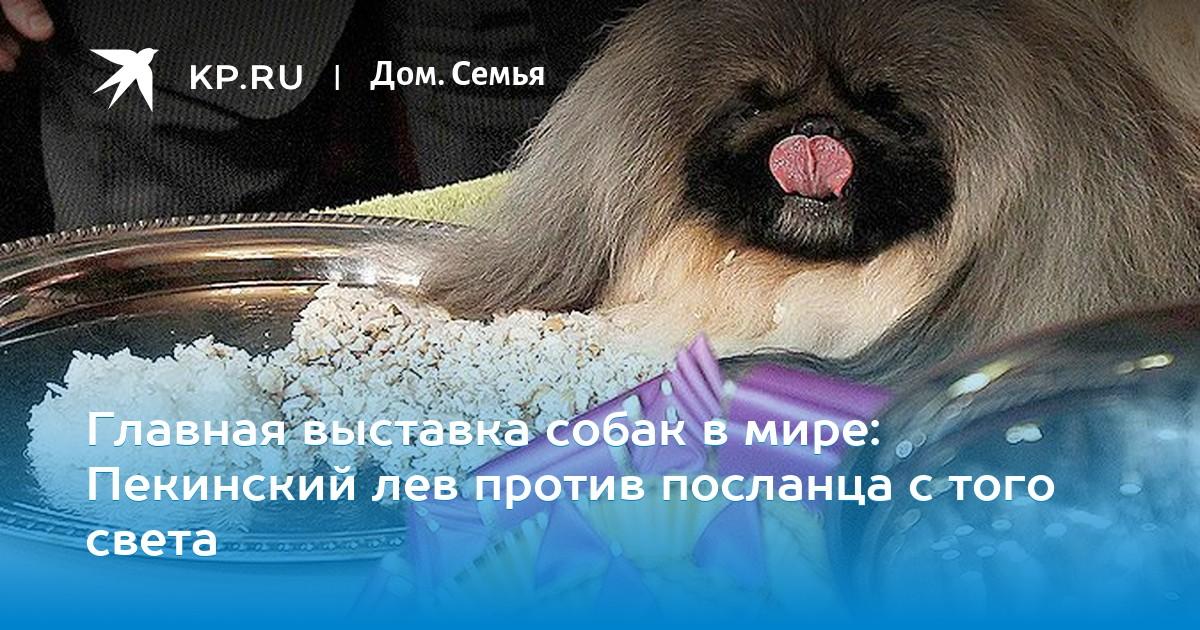 Выставка собак клуб ювентус