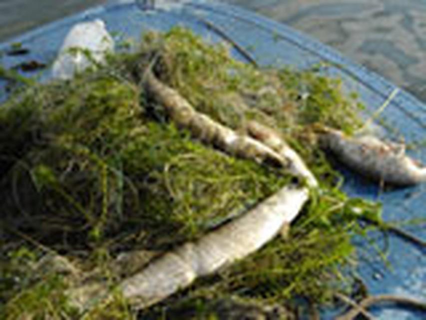 ловить сетями в псковской области
