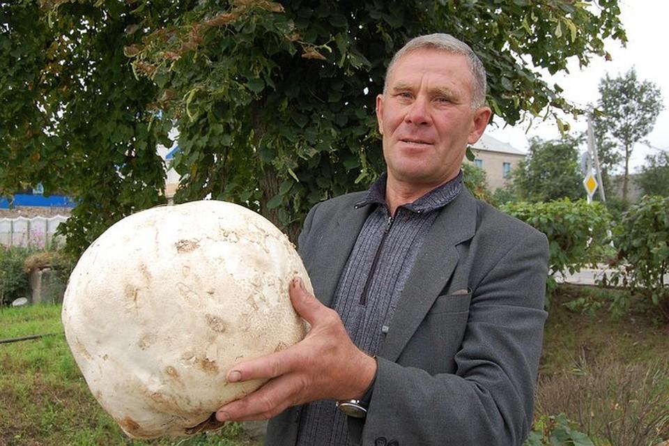 большой фото гриб самый дождевик