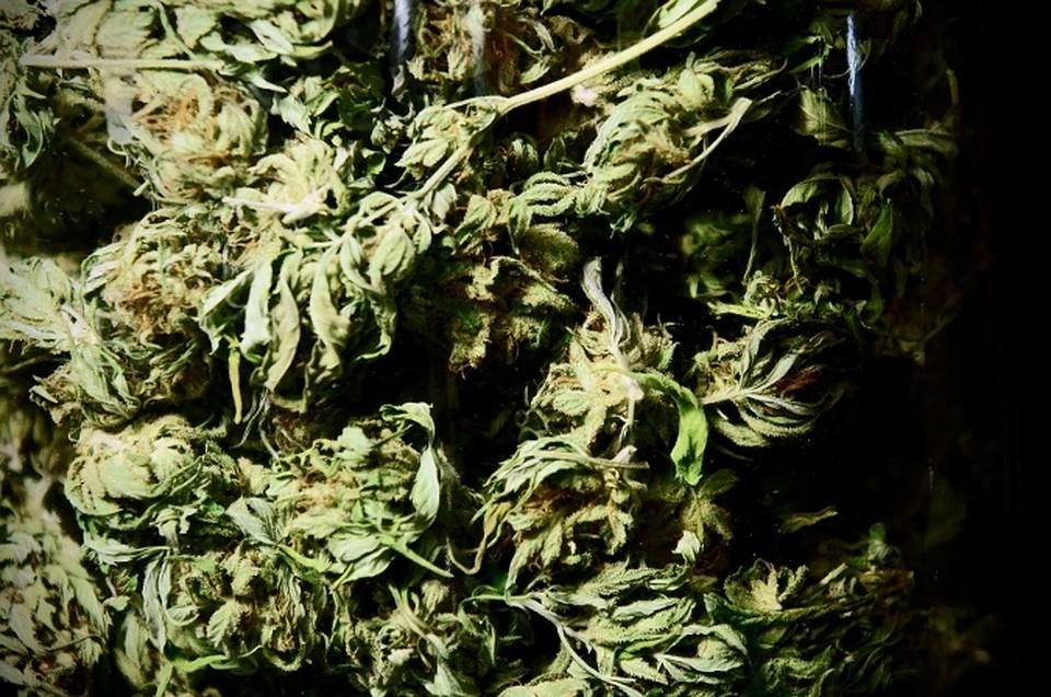 Глаукома лечебную марихуану селитра для марихуаны