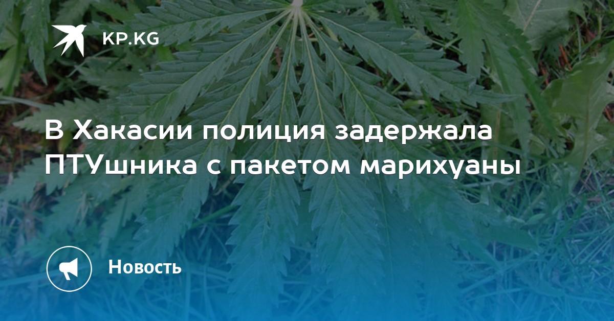 Марихуана медосвидетельствование продажа семян марихуаны в украине