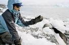 Как живут полярники в Антарктиде