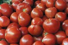 Можно ли вырастить крупноплодные томаты в открытом грунте?