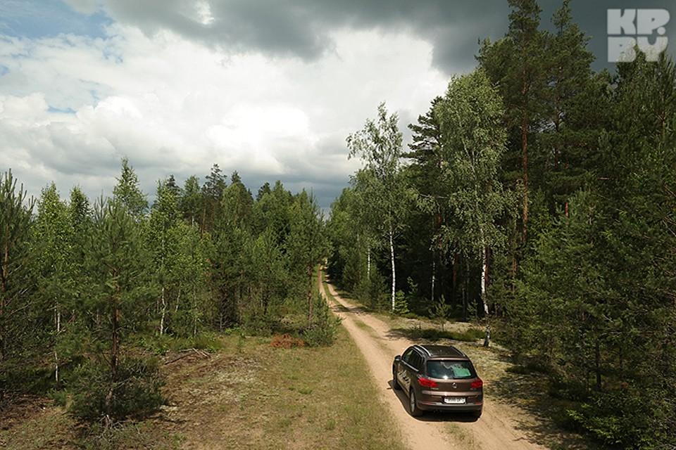 Леса Налибокской пущи кажутся бескрайними.