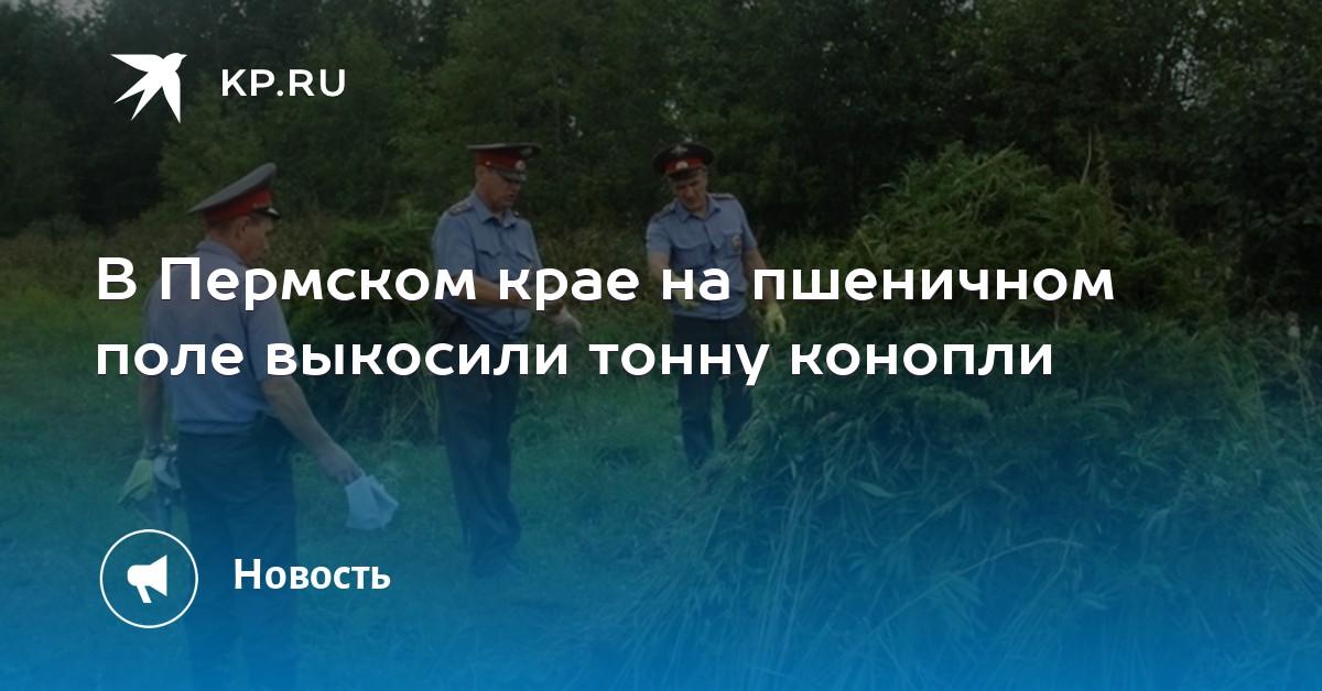 Конопля bot telegram Брянск Xtc online Псков